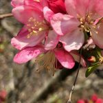 spring equinox, anthony ashworth, vastu