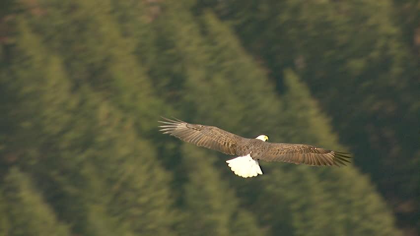 Eagle consciousness